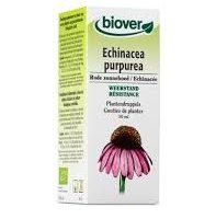 Teinture mère Echinacée bio (50 ml) - Biover