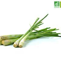Huile Essentielle de Citronnelle bio (10 ml) - Abiessence