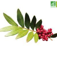 Huile Essentielle de Lentisque pistachier bio (5 ml) - Abiessence