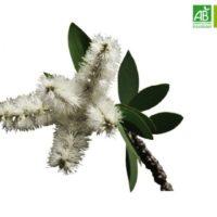 Huile Essentielle de Niaouli bio (10 ml) - Abiessence