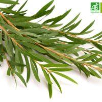 Huile Essentielle de Tea Tree bio (10 ml) - Abiessence